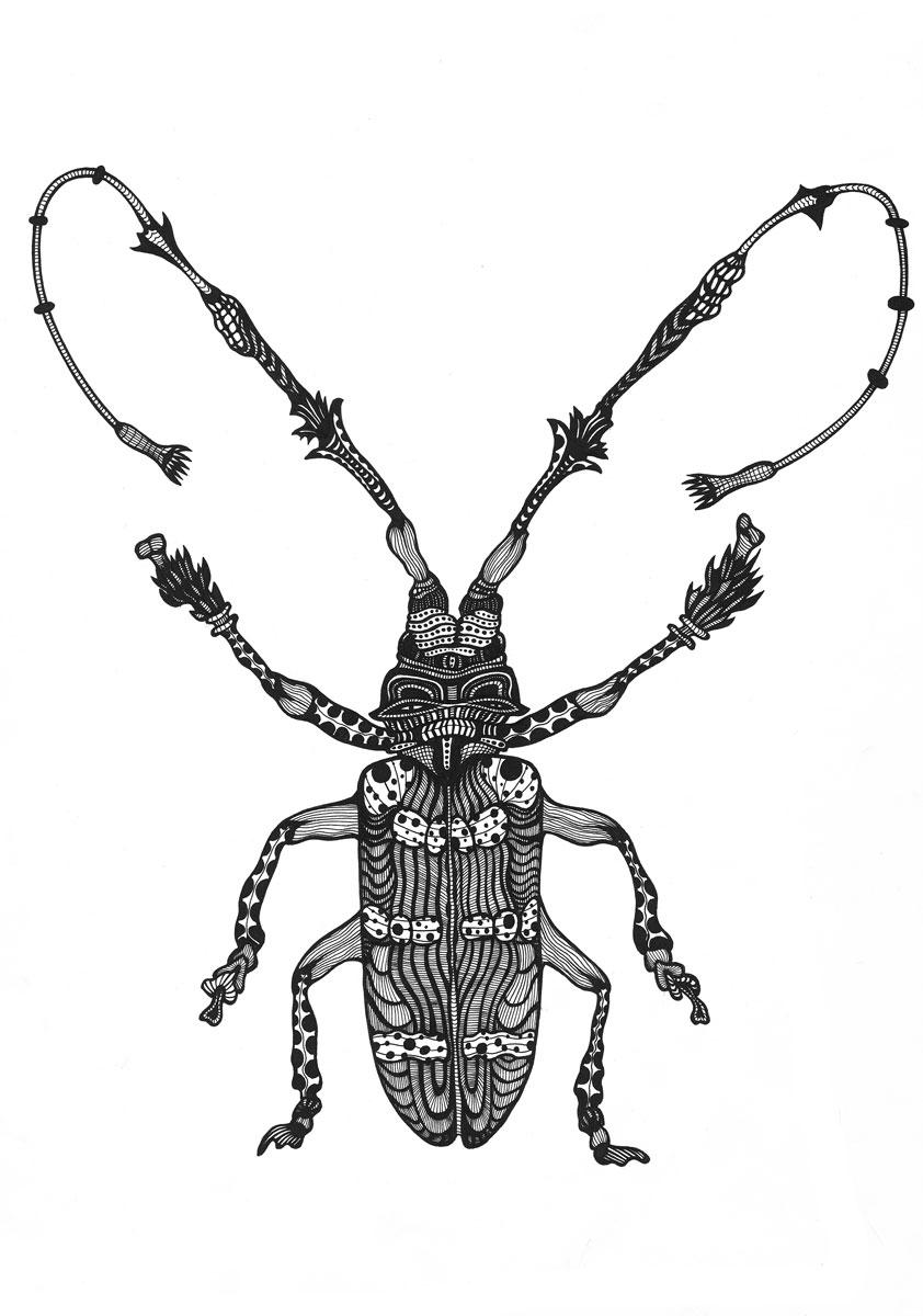 beetle20x30-gallery